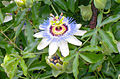 20060901 53 Phiipps Conservatory, Pittsburgh (15923588986).jpg