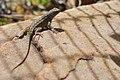 2010-365-309 Mr Gecko (5150515058).jpg