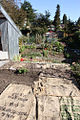 2010 community garden seattle 5099164330.jpg