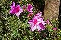 2011-03-05 03-13 Madeira 182 Monte, Jardim tropical Monte Palace.jpg