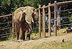 2012-06-09 Oakland Zoo 054 (7439962872).jpg