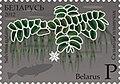 2012. Stamp of Belarus 13-2012-04-z2.jpg