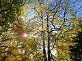 20121031050DR Dresden-Innere Neustadt Palaisgarten.jpg