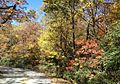 2012 Fall Color in the Chattahoochee National Forest (8113838295).jpg
