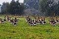 20130921 085 Kessel Weerdbeemden Grauwe ganzen x (9861751865).jpg