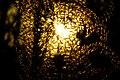 2016-11-25 Yashiro forest park,やしろの森公園 母屋 ススキと夕陽 DSCF6082.jpg