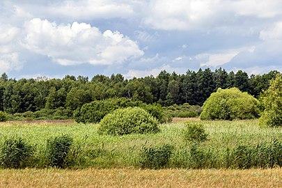 2016 Landschaft bei Klein Quassow 01.jpg
