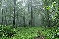2019-05-21 121316 Naturwald Steinbrink.jpg