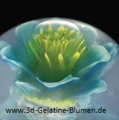 3d-Gelatine-Blume Elfenschuh 1.png
