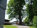 400 jährige Linde - panoramio.jpg