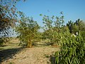 43Lubao Bamboo Hub & Eco-Park Santa Catalina Pampanga 08.jpg