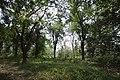 AJC Bose Indian Botanic Garden - Howrah 2018-04-01 2390.JPG