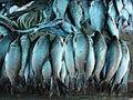 A close-up of fish11.JPG