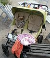 A dog and his carriage (2766573244).jpg