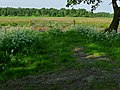 A fence in the meadow with high grass; North-Netherlands in spring of 2012.jpg