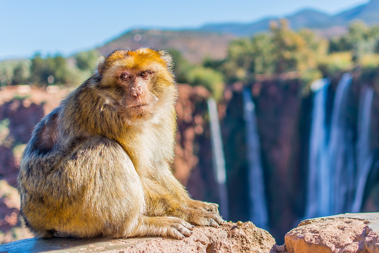 Image result for ouzoud waterfalls