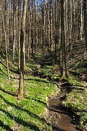 A small gully in Gullmarsskogen 2.jpg