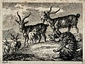A wolf sitting on a mound is talking to four ibexes and a sh Wellcome V0020721EBR.jpg