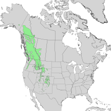 Abies lasiocarpa range map 1.png