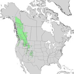 Distribución del Abies lasiocarpa.