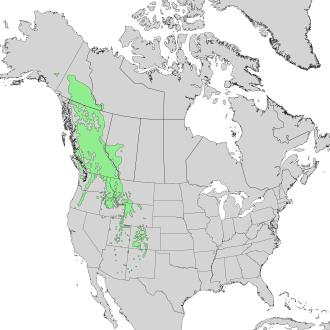 Abies lasiocarpa - Image: Abies lasiocarpa range map 1