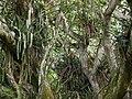 Aburi garden 8.jpg