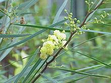 Plants Apotheca