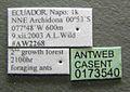 Acanthoponera mucronata casent0173540 label 1.jpg