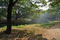 Acharya Jagadish Chandra Bose Indian Botanic Garden - Howrah 2011-01-08 9752.JPG