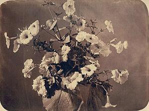 Adolphe Braun - One of Braun's early Flower studies (1855)
