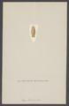 Aega bicarenata - - Print - Iconographia Zoologica - Special Collections University of Amsterdam - UBAINV0274 006 03 0049.tif