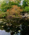 Alfred Caldwell Lily Pond with rocks.jpg