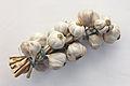 Allium sativum. Restra de allos de Oroso- Galiza.jpg
