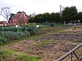 Allotments at the Riverside Centre - geograph.org.uk - 1050117.jpg