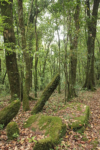 Sacred grove - Ancient monoliths in Mawphlang sacred grove, India