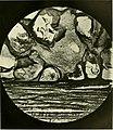 Annals of applied biology (1915-1916) (18225050158).jpg
