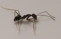 Ant B.png