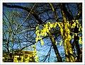 April Freiburg Botanischer Garten - Master Botany Photography 2013 - panoramio (10).jpg