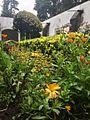 Arbustos ubicados en el jardín de la entrada para visitantes ex Convento del Desierto de los Leones.jpg