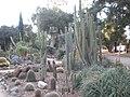 Arizona Cactus Garden 007.JPG