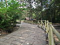 Around Athirappilly Falls during Dec2011 0389.JPG