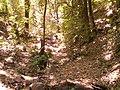 Arroyito En tateposco, Zapopan Jalisco. - panoramio.jpg