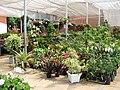 Associação de Floricultores da Rota Romântica 003.JPG