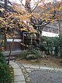 Autumn Leaves in Ryoanji Temple 3.jpg