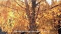 Autumn Shimmer (25773127181).jpg