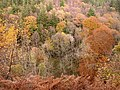 Autumn at Harsondale Cleugh - geograph.org.uk - 614912.jpg
