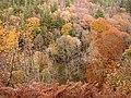 Autumn at Harsondale Cleugh - geograph.org.uk - 614912.jpg