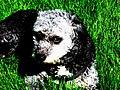 Bakka the Dog.jpg