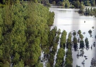 Balta Ialomiței - Image: Balta Ialomiţei flooded bgiu