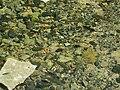 Banias River10.jpg